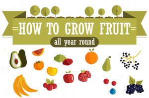 How To Grow Fruit All Year Round Featured Image