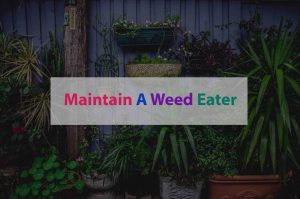How-To-Maintain-A-Weed-Eater