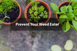 How-to-Prevent-Your-Weed-Eater-from-Damaging