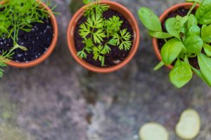 Reasons-To-Plant-A-Herb-Garden